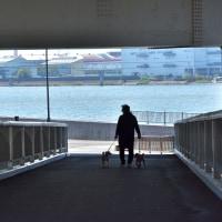 いつもの散歩道・・・(04/19)