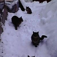 冬の野良猫