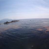 日本海も夏日