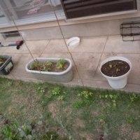 6月の庭作業