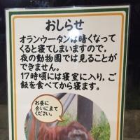 夜の動物園、わたし…飼育員になる?!