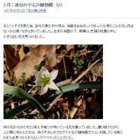 10年前の今頃訪れていた小石川植物園  河津桜、ニシキマンサク、ハヤザキマンサク、アマナ等