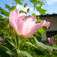 夏の、好きな花