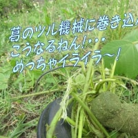 私も干乾し気分でペッチャンこ~・・!本質的な川保全、「かくれんぼゴミも見逃さない!」京都府さんに感謝!