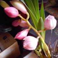 もうすぐ咲きますよ・・・!