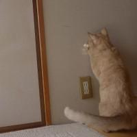 2)光を追う ネコ