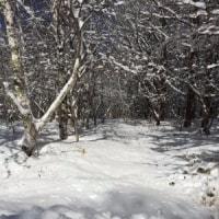 山の写真をお届け(2)