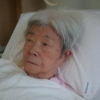 92才の介護ダイアリー、病室の彼女にリンゴジュースを運ぶ、今日から昼と夕方の2回、吸い口2回分が1個の王林、