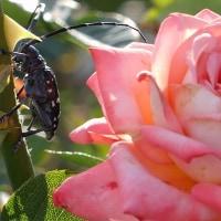 甲虫と剪定