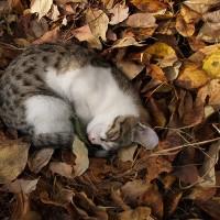 比治山の猫222