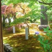 夏でも東福寺