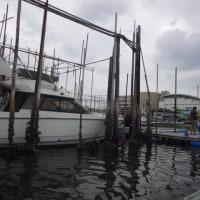 三連休の最後は職場の方々とハゼ釣り in 江戸川放水路