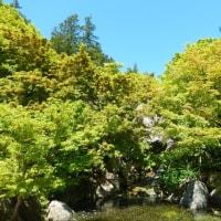 昭和記念公園もう一つのスプリングマジック