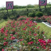 原里バラ園の秋バラ