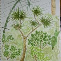 東京都夢の島熱帯植物園  絵画教室 第2年度 16回目  写生会