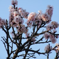 鮮やかなピンク色の花