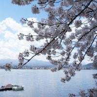 河口湖でお花見