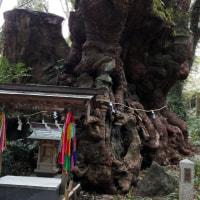 熱海のパワースポット来宮神社