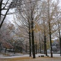 秋と冬が一緒。