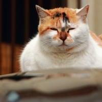 猫・椿・梅 金沢の街