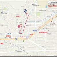 河津桜(カワヅザクラ)が岡山市内の中心部で満開