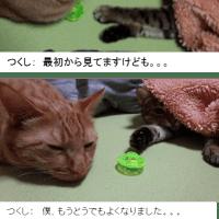 くるみ(ベンガル猫)とつくし(茶トラ)のおもちゃ攻防戦(猫写真漫画)