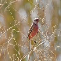 三島江河川敷の鳥たち!
