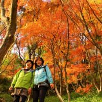 高槻市の摂津峡に紅葉ハイキングに行って来ました。(TT )