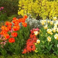 2017春 中庭の花壇