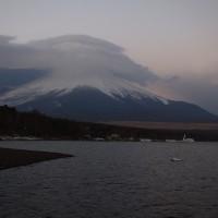 17年2/20~山中湖~ハクチョウ
