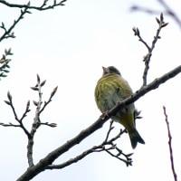 小鳥 水鳥 花 で楽しみました