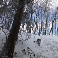 樹氷の三峰山からなんと富士山が。しかし下山中ジグザグ道を横着して道を間違えてひどい目に。2017年1月26日 その1