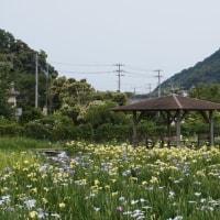 2017.6.11下田公園行ってきました~