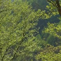 新緑が美しい