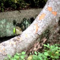 大阪城公園探鳥会 10月