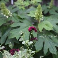 癒しの花たち