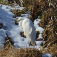 忍法、雪隠れの術の白鷺
