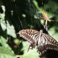 平成イソップ物語 16: 蜘蛛と花