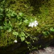 てばこまんてばが咲いていました