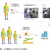 京都大iPS細胞研究所、大学・企業向け提供、一部停止!
