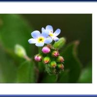 小さな可愛いお花