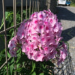 脂粉香る花