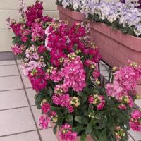園芸・ガーデニング  2月の玄関
