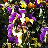 笑転爺の釣行記 2月15日☀ 長瀬・久里浜