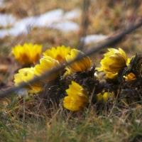 春告げ花~に、