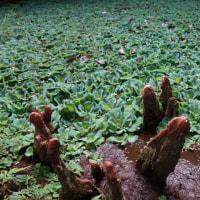 屋久島の不思議な植物たち