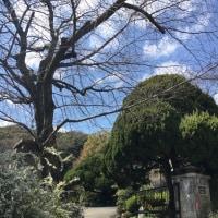 神戸外国倶楽部から元町まで散歩