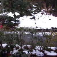 まだまだ雪の影響が