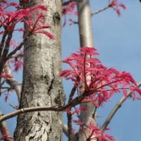 比較的乾燥した場所に咲くミチタネツケバナです