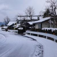 雪の青木花見
